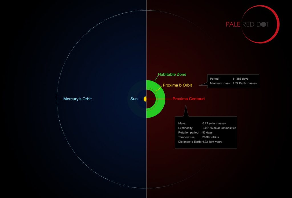 This infographic compares the orbit of the planet around Proxima Centauri (Proxima b) with the same region of the Solar System. Proxima Centauri is smaller and cooler than the Sun and the planet orbits much closer to its star than Mercury. As a result it lies well within the habitable zone, where liquid water can exist on the planet's surface.