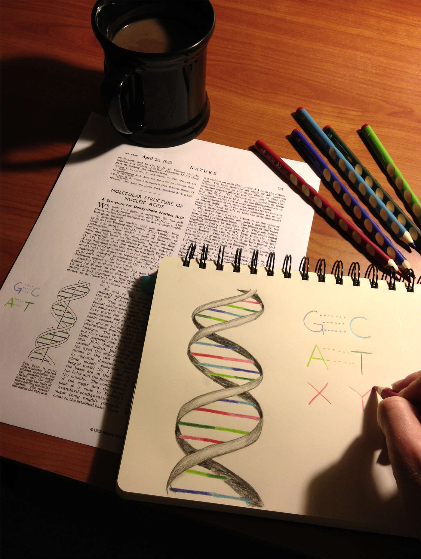 By adding the DNA letters X and Y, cells can make proteins with up to 172 different amino acids—compared to nature's set of 20.