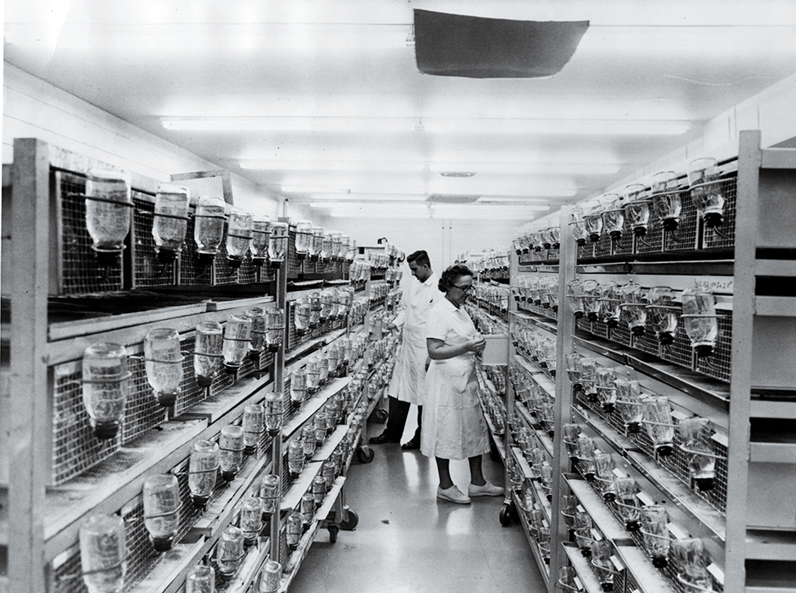 1970s Scientists experiment with using viruses to introduce new genes into animals.