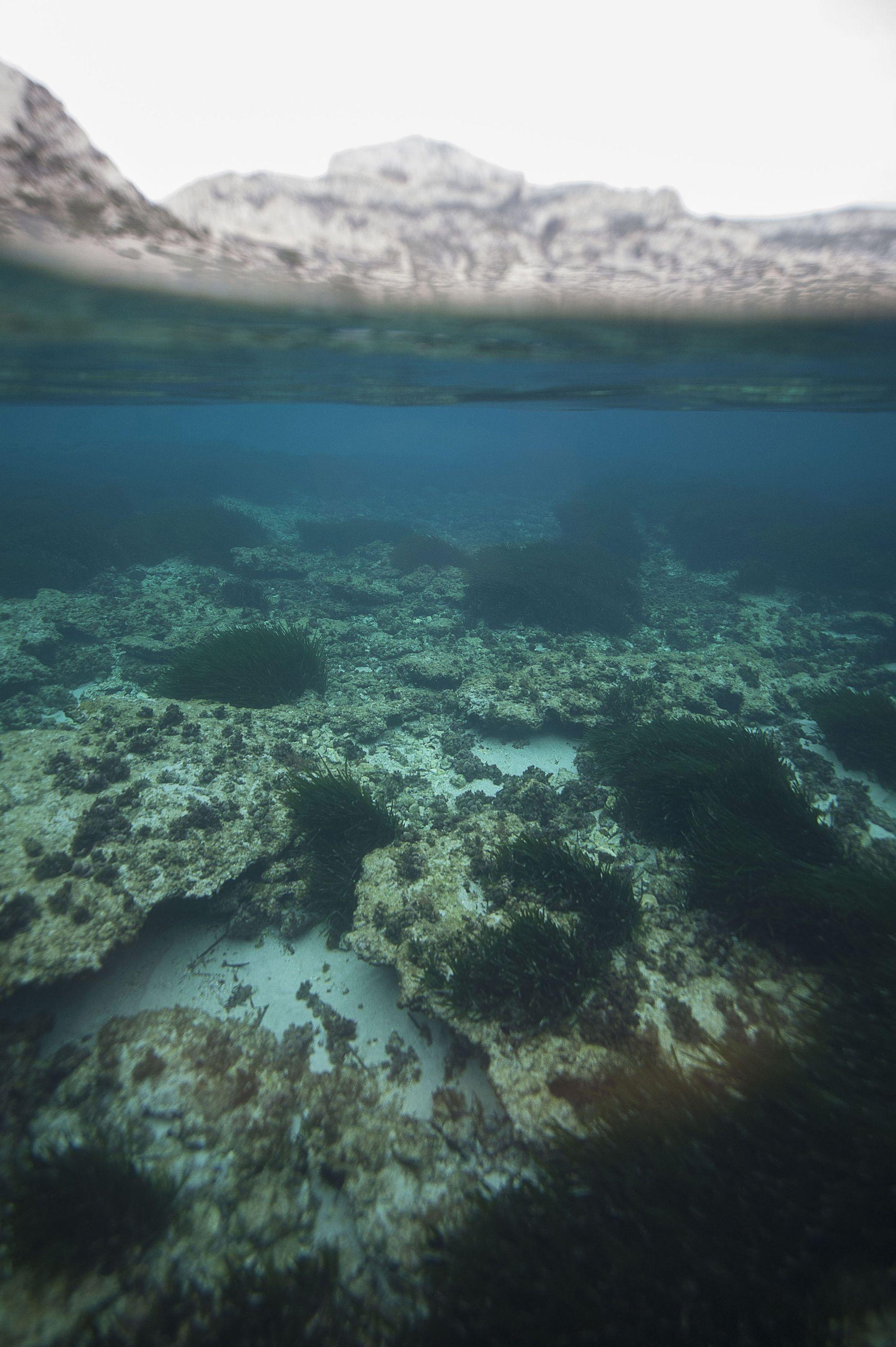 海底レアメタル発見で温暖化対策と環境破壊にジレンマ