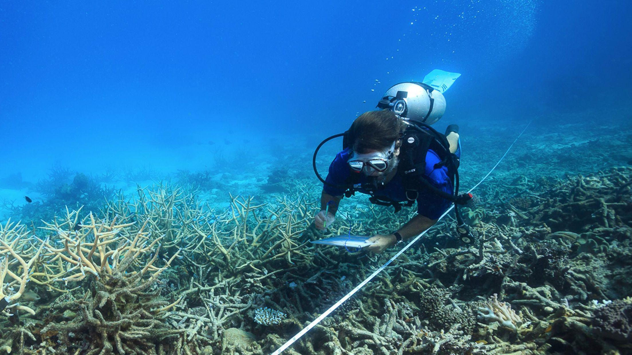 グレートバリアリーフの 珊瑚礁を救うには 雲を明るくするしかない