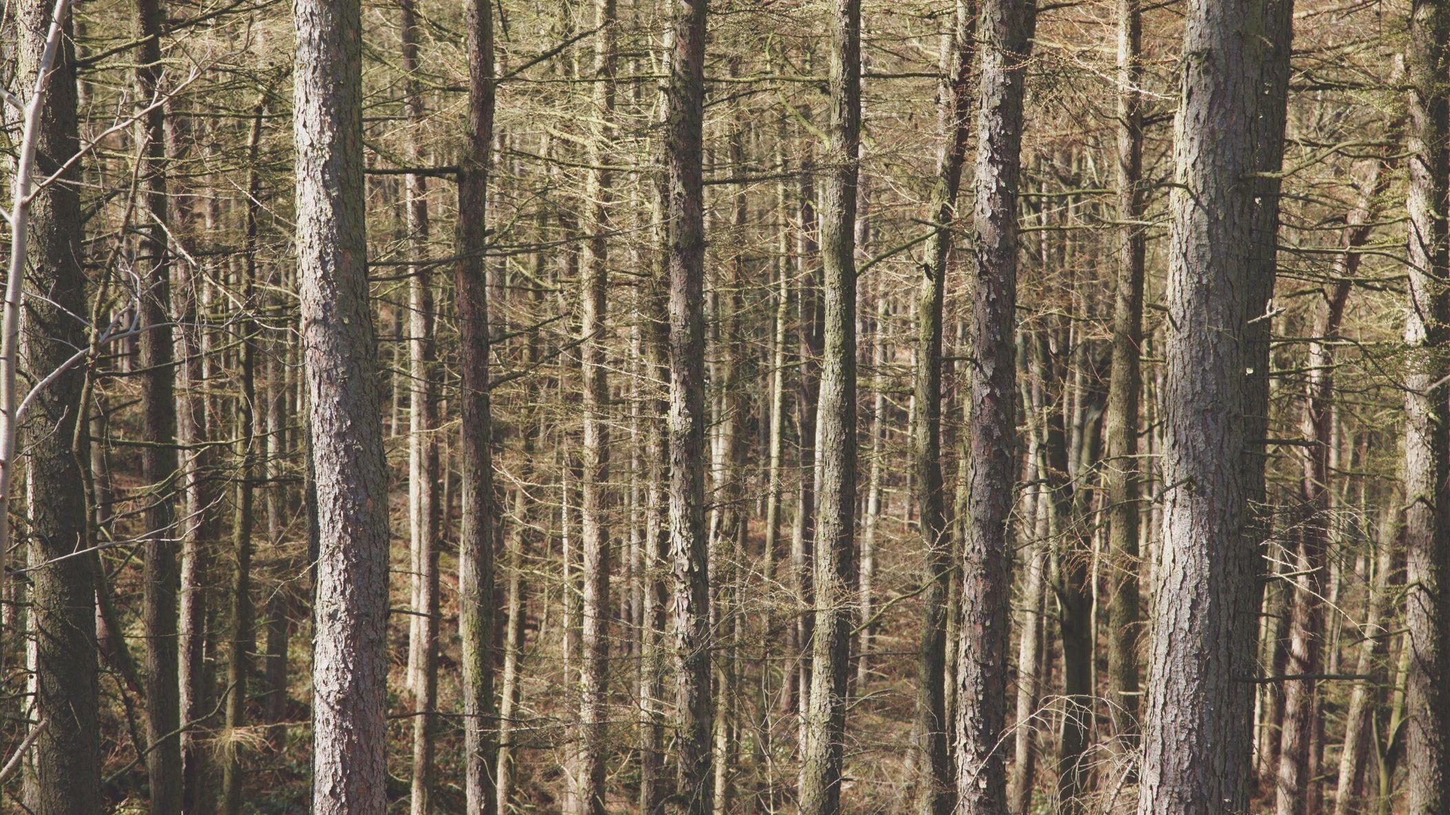 樹木や草を増やせば、気候変動に対処できるのではないか?