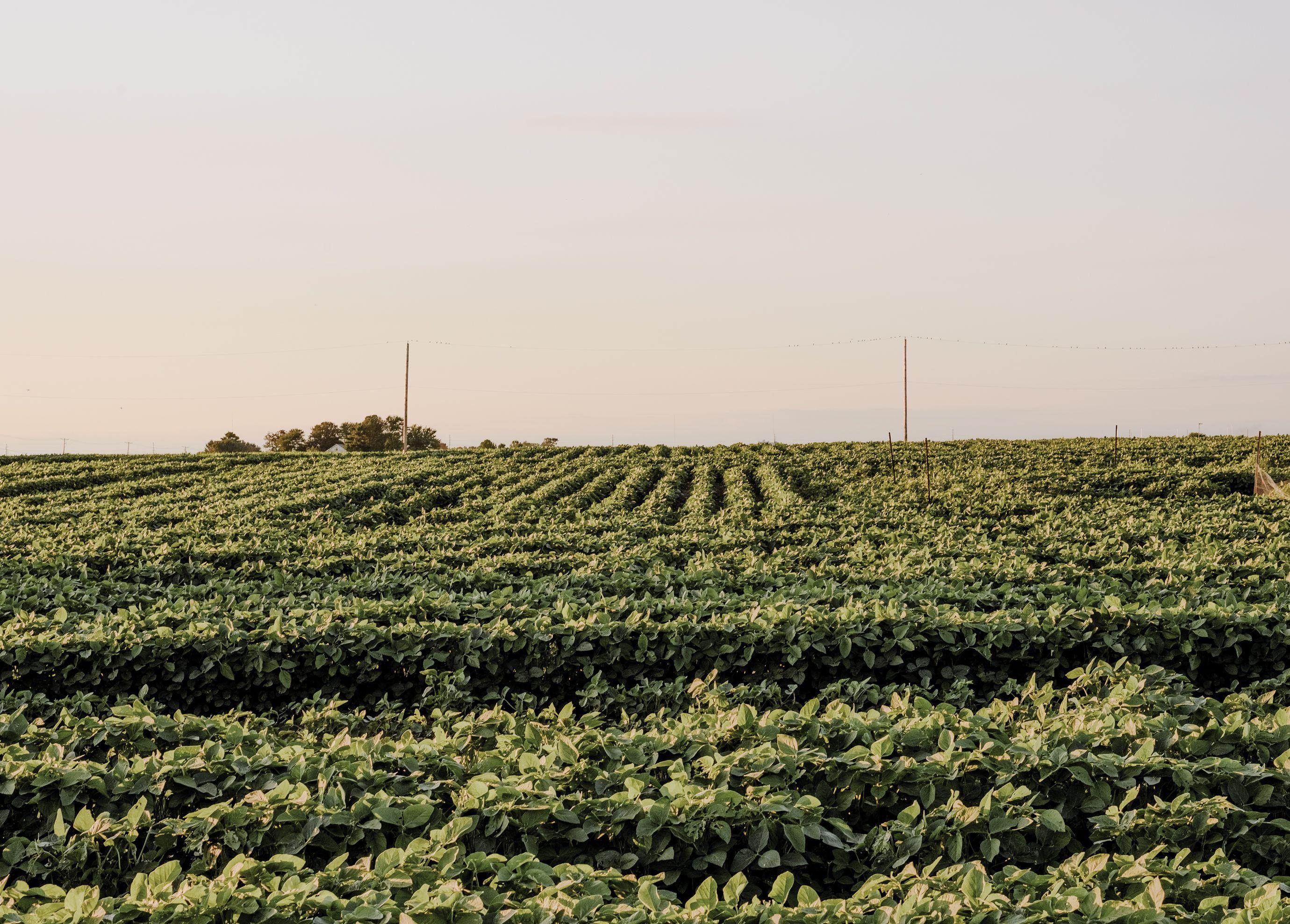 光合成を効率化した 遺伝子組み換え作物が 食糧危機を救う