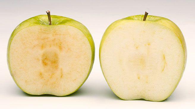 茶色くならない 遺伝子組み換えリンゴは 消費者にウケるか?