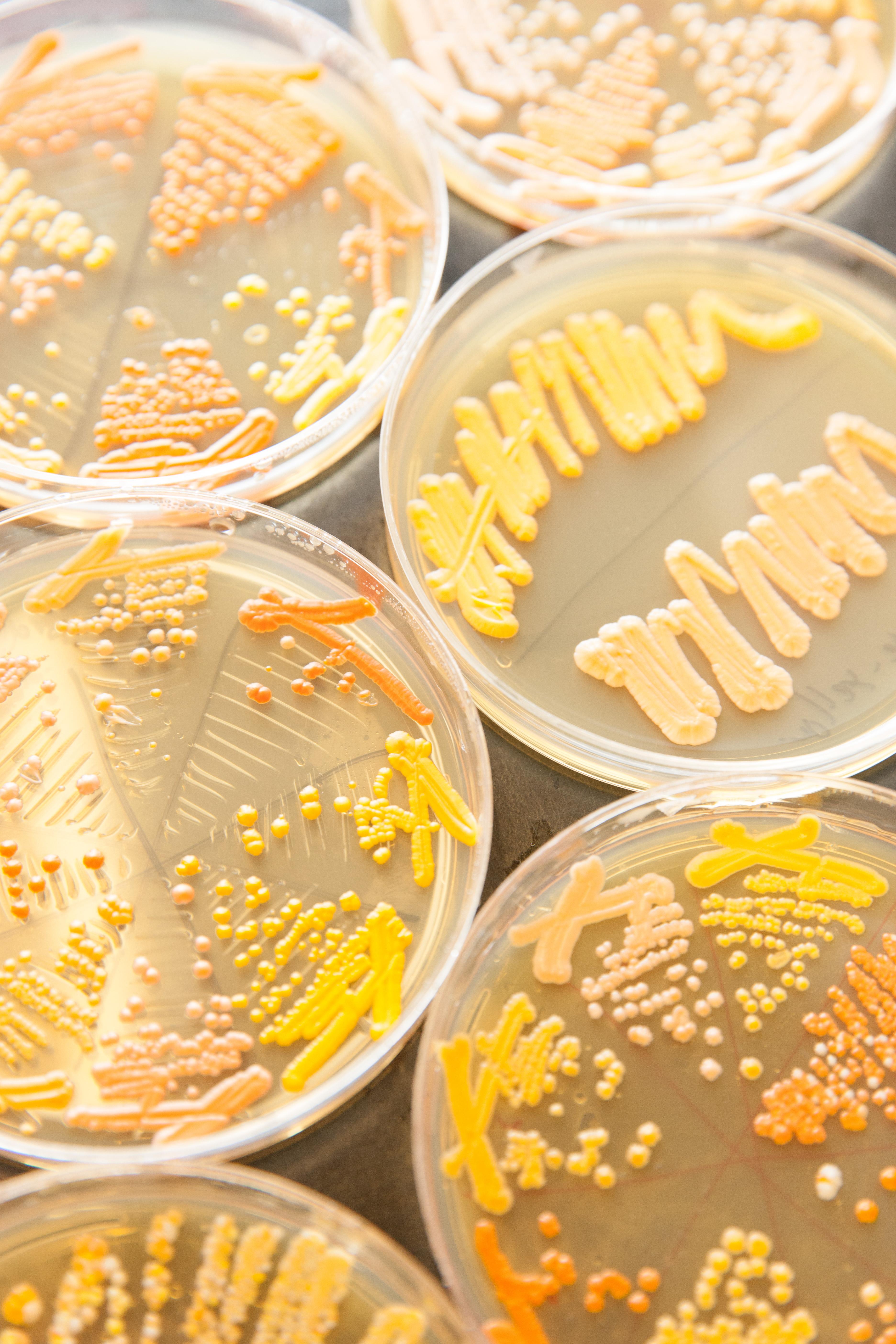 次の産業革命の幕を開く 人工合成酵母のインパクト