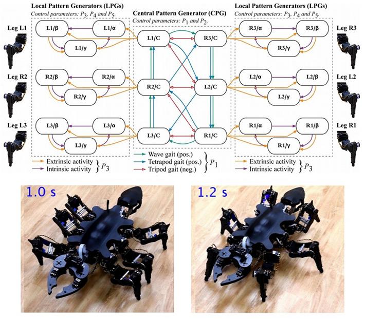 アリやゴキブリの動きを模倣、東工大が6脚ロボットを開発