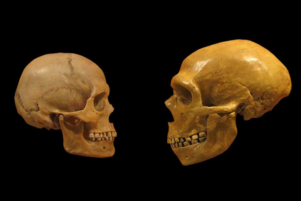 「世紀の大発見」目指す科学者、古代DNAの抽出競争が激化