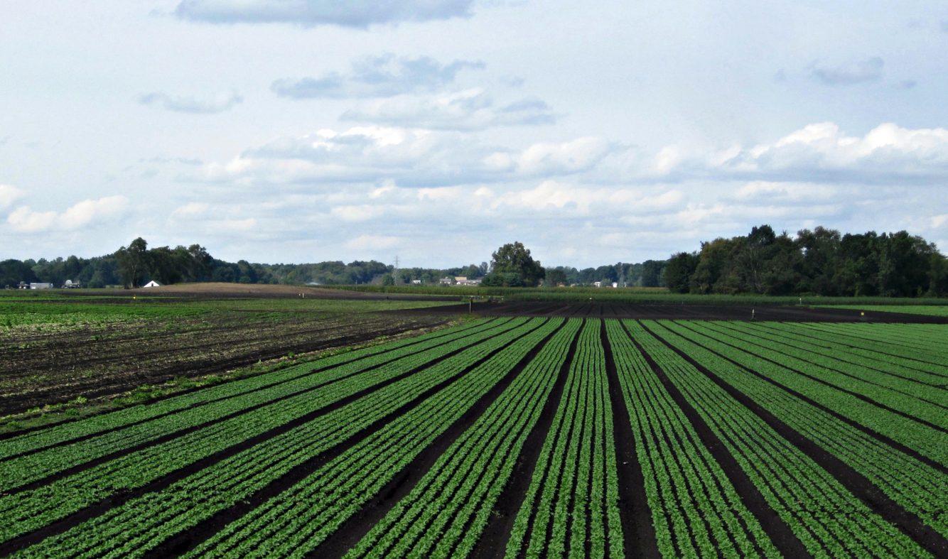 名大が空気から肥料を作り出す植物を研究中、農業革命なるか