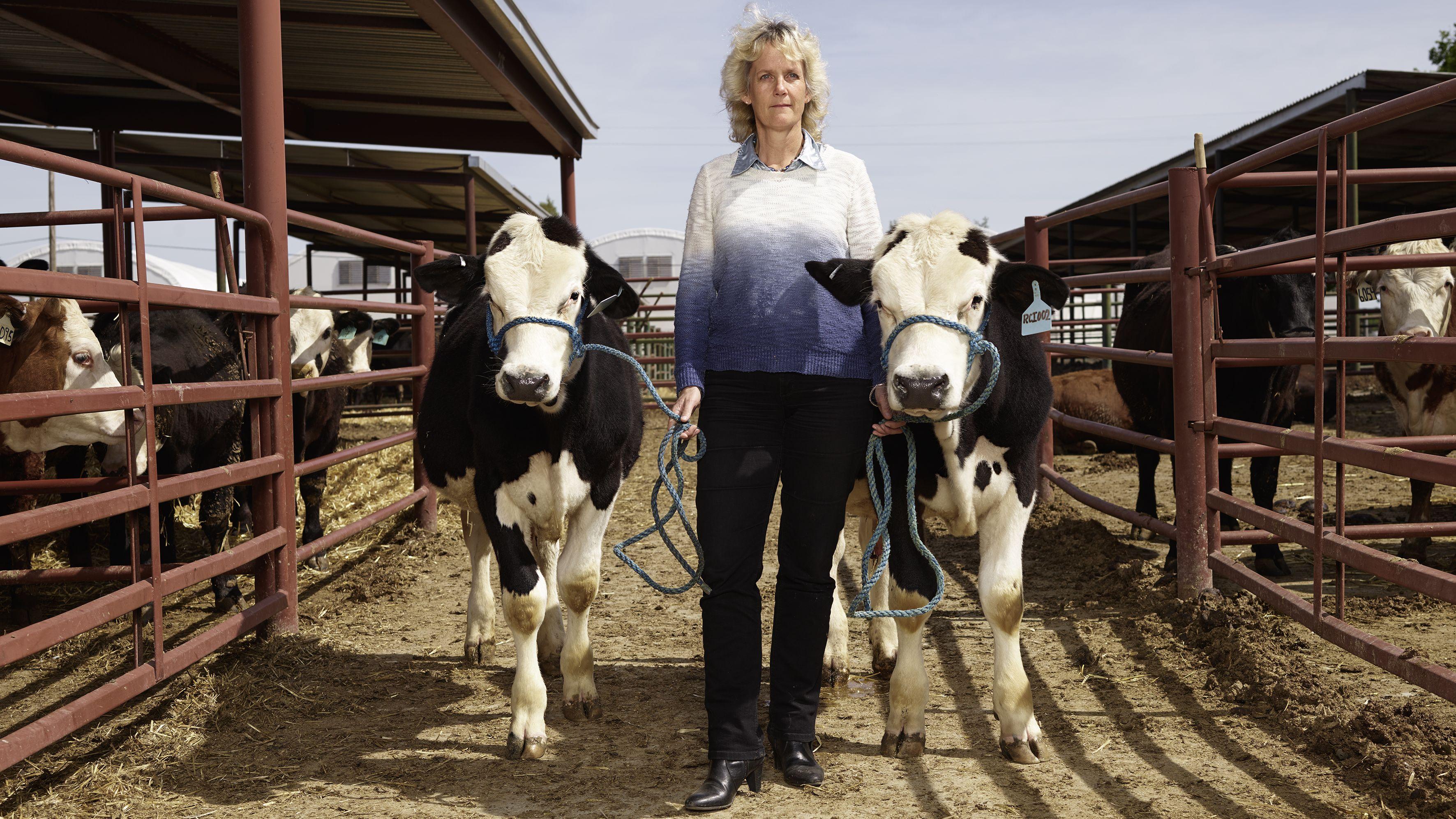 雄しか産ませない雄牛、 CRISPRで目指す 家畜育種のイノベーション