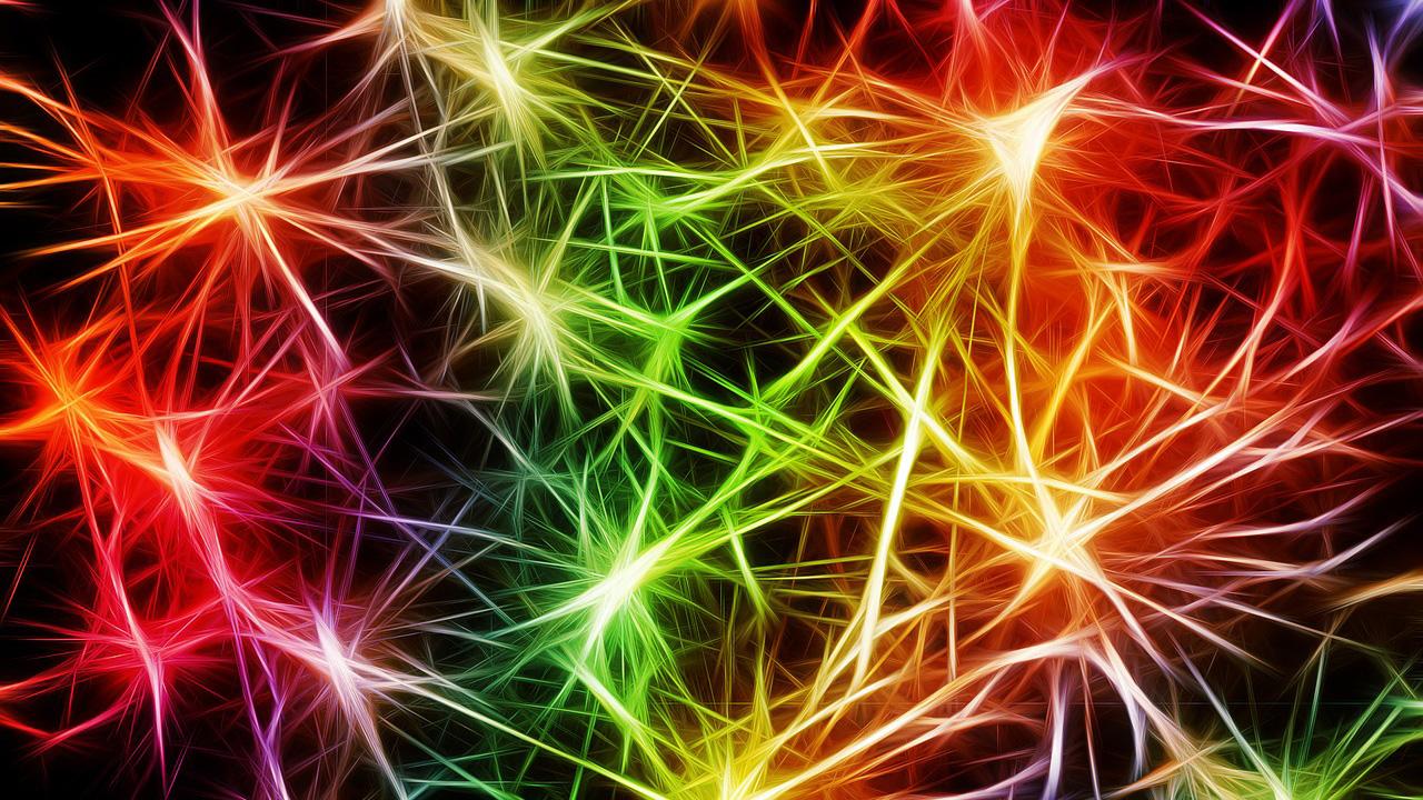 深層学習で脳細胞解析を自動化、グーグルがオープンソースで公開
