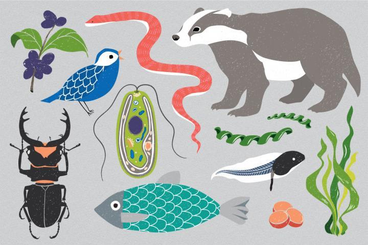 150万種の生物のゲノムを解析、「地球バイオゲノム計画」が始動