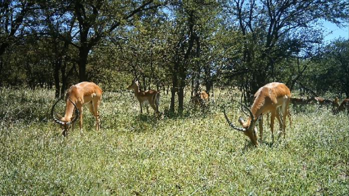 野生動物の写真をAIで識別、96.6%の精度を達成