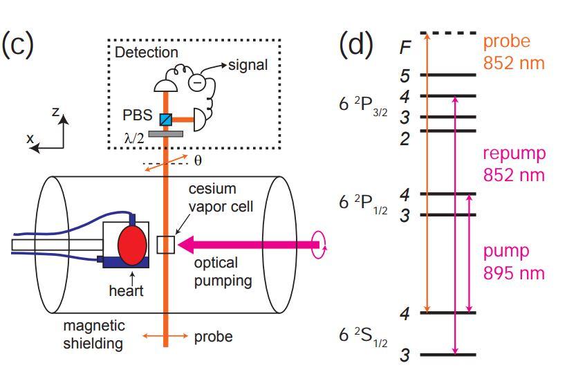 ASCII.jp:胎児の心臓病を検出、...