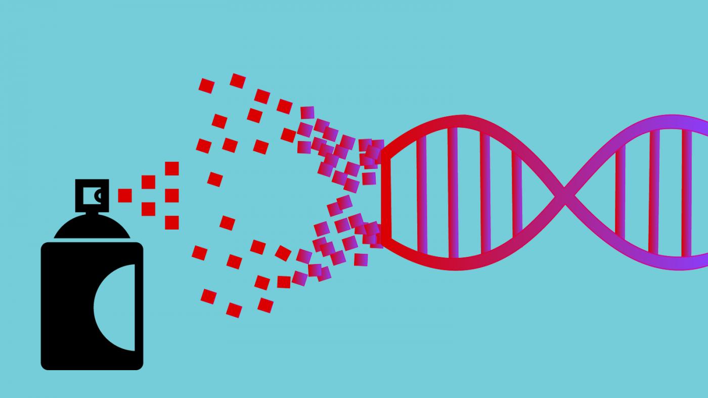 CRISPRに重大欠陥か、遺伝子治療でDNA損傷の恐れ