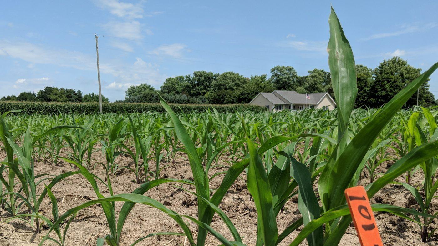 合成肥料に代わる植物向け善玉菌、ゲイツ支援のバイオ企業発売へ