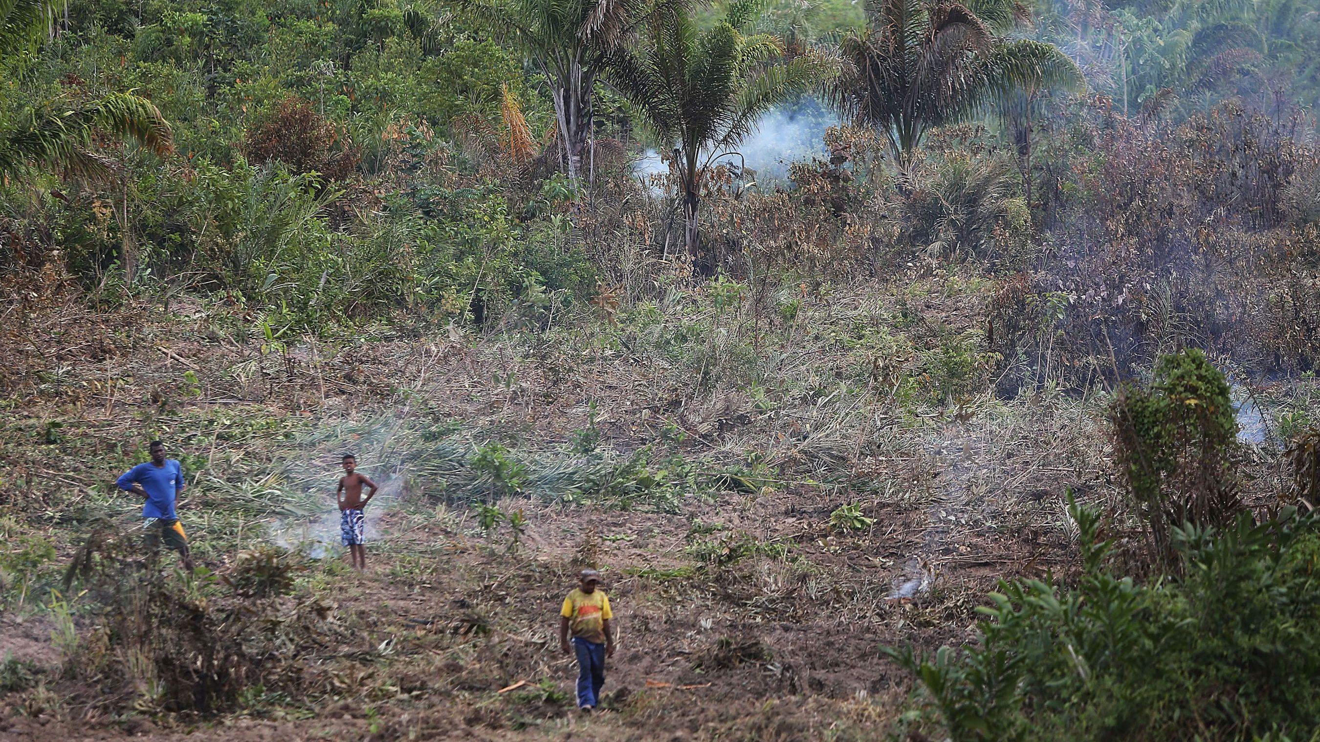 「ブラジル版トランプ」誕生で地球規模の気候変動リスク