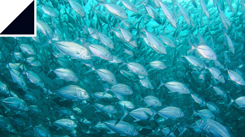 魚はなぜ高速で泳げるのか?3D数値流体力学で長年の謎を解明