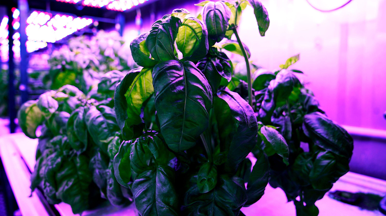 機械学習でもっとおいしく、 AIが変える農業の「常識」