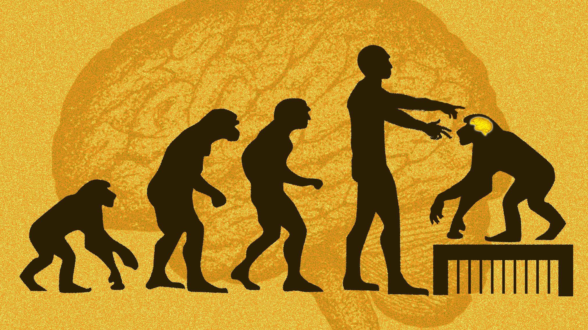 「猿の惑星」への扉を開く? MCPH1遺伝子を移植、 中国で「賢いサル」誕生か