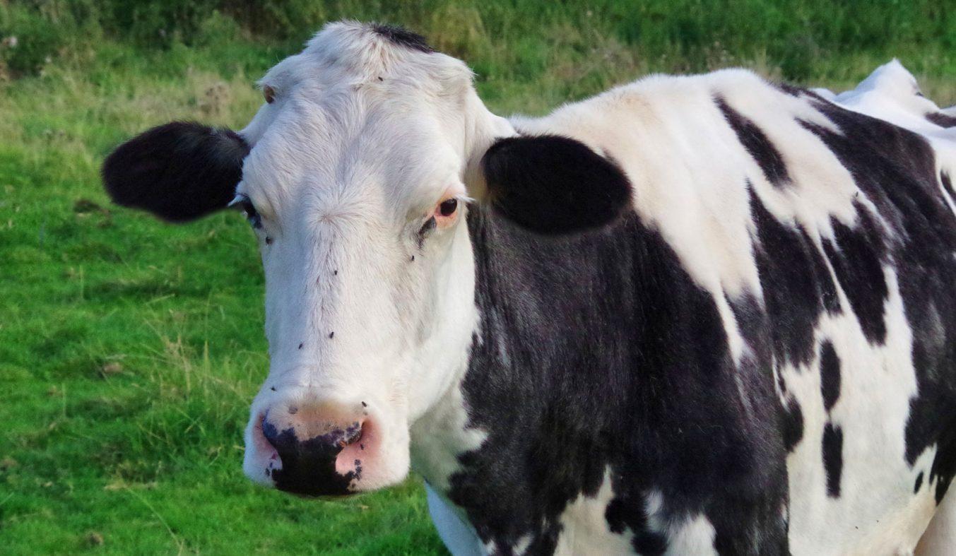 5G接続の「牛のインターネット」、シスコが英国でテスト中