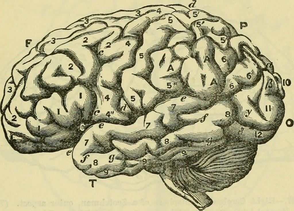 揺らぐ死の定義、「死んだブタ」の脳の一部機能が回復