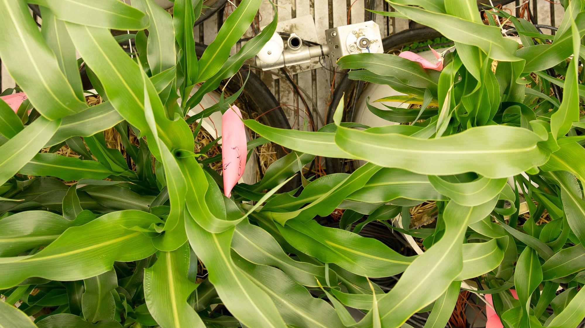 知られざる米国農業の危機、 収穫量「激減」時代が来る