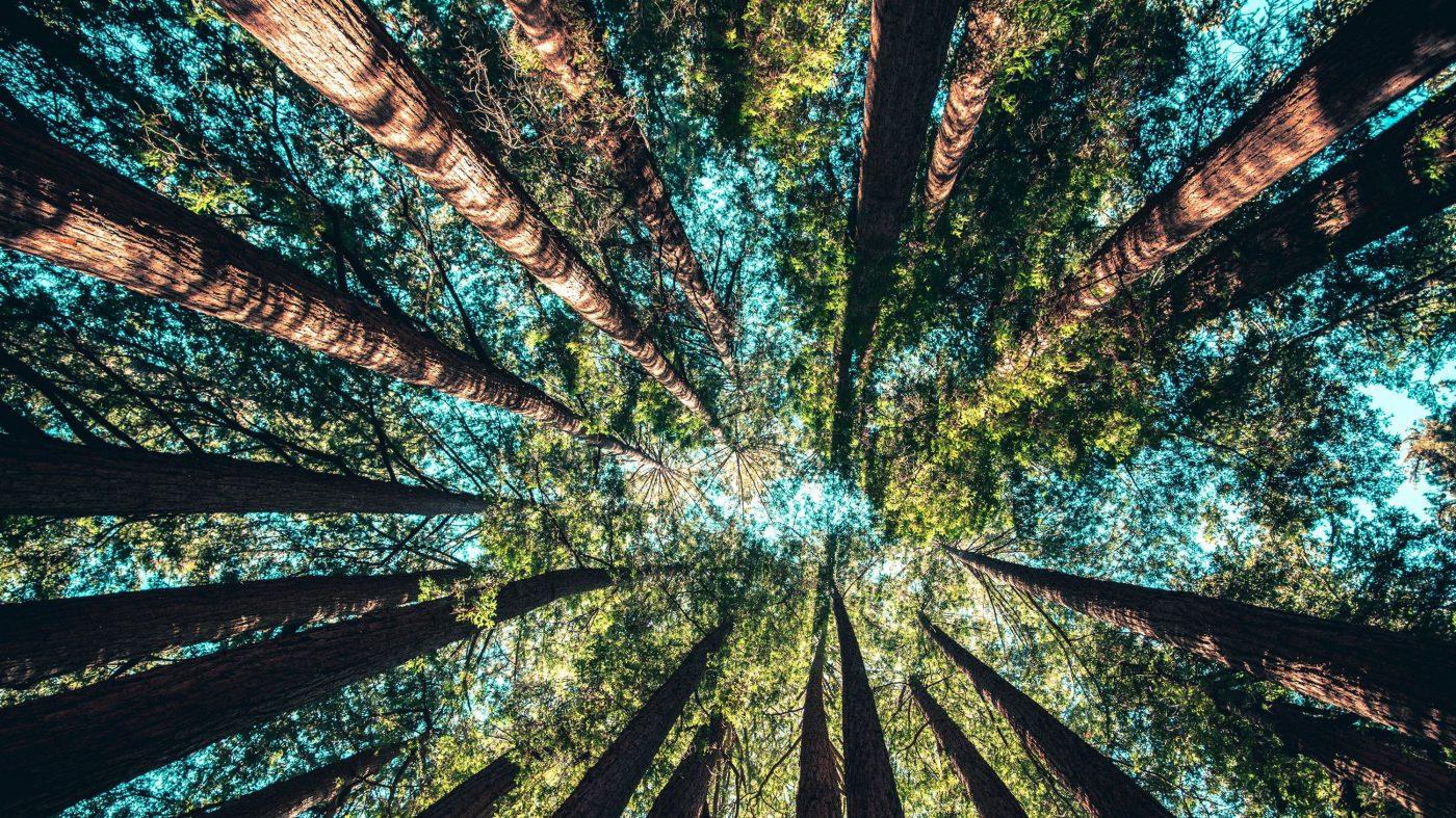 「森林再生」が気候変動対策の切り札に?