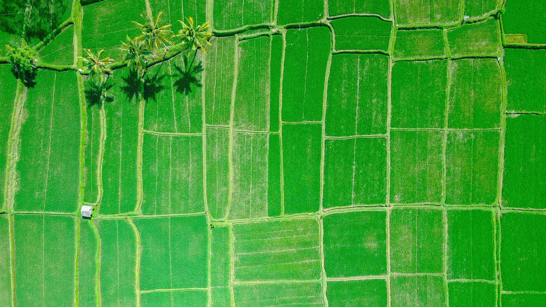揺れる「持続可能な農業」の定義、有機よりも遺伝子編集が必要に