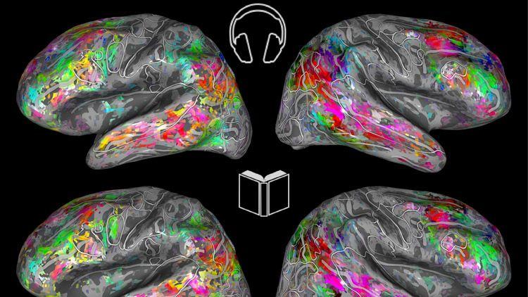 いま何を読んでいる? UCBが新たな3D脳マップ