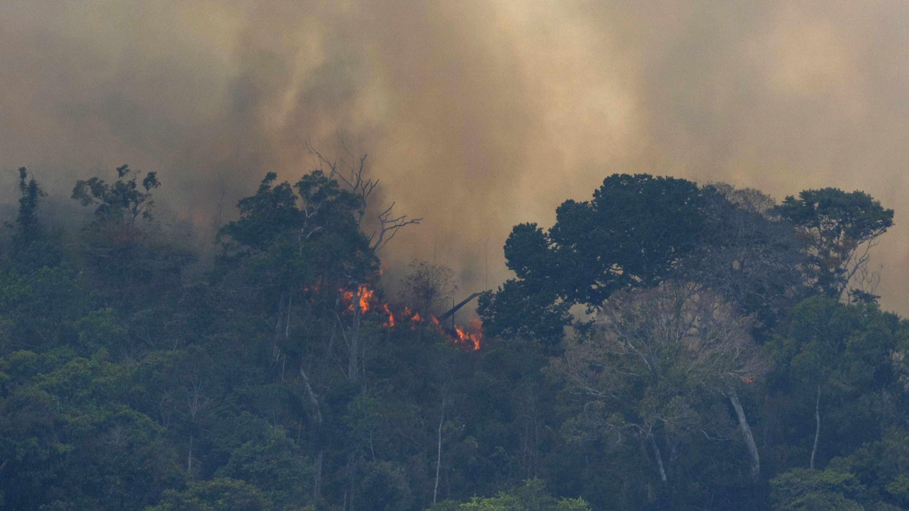 アマゾン森林火災、 「臨界点」超えの恐れ