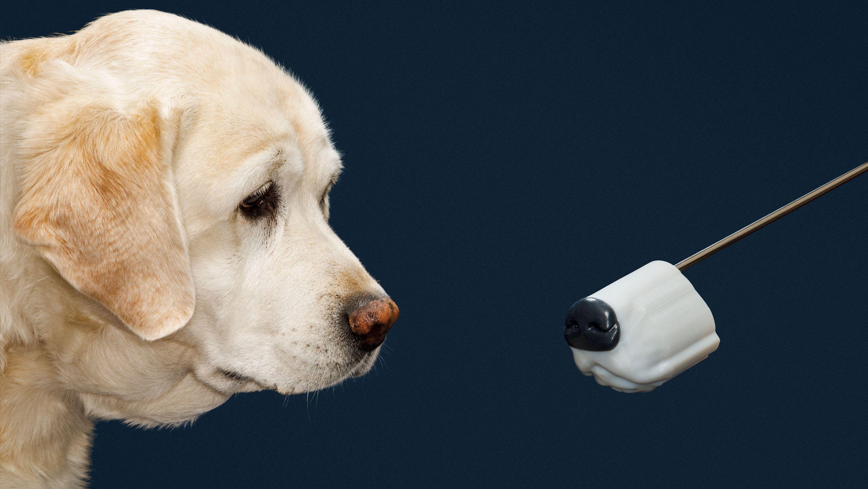 爆発物探知機が 犬の嗅覚に勝てない理由