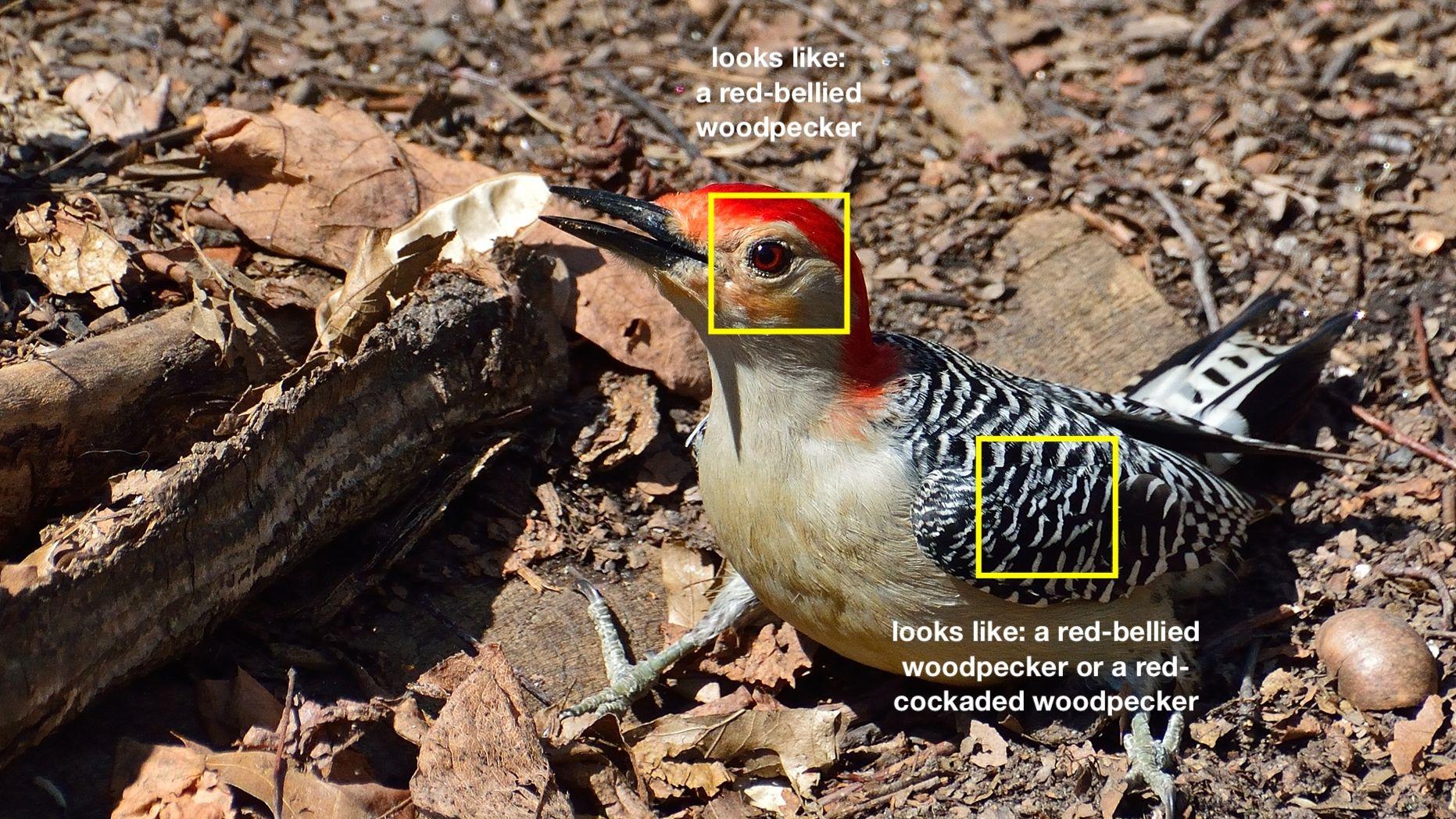「見分け方」を学習、説明できる画像認識=MITなど開発