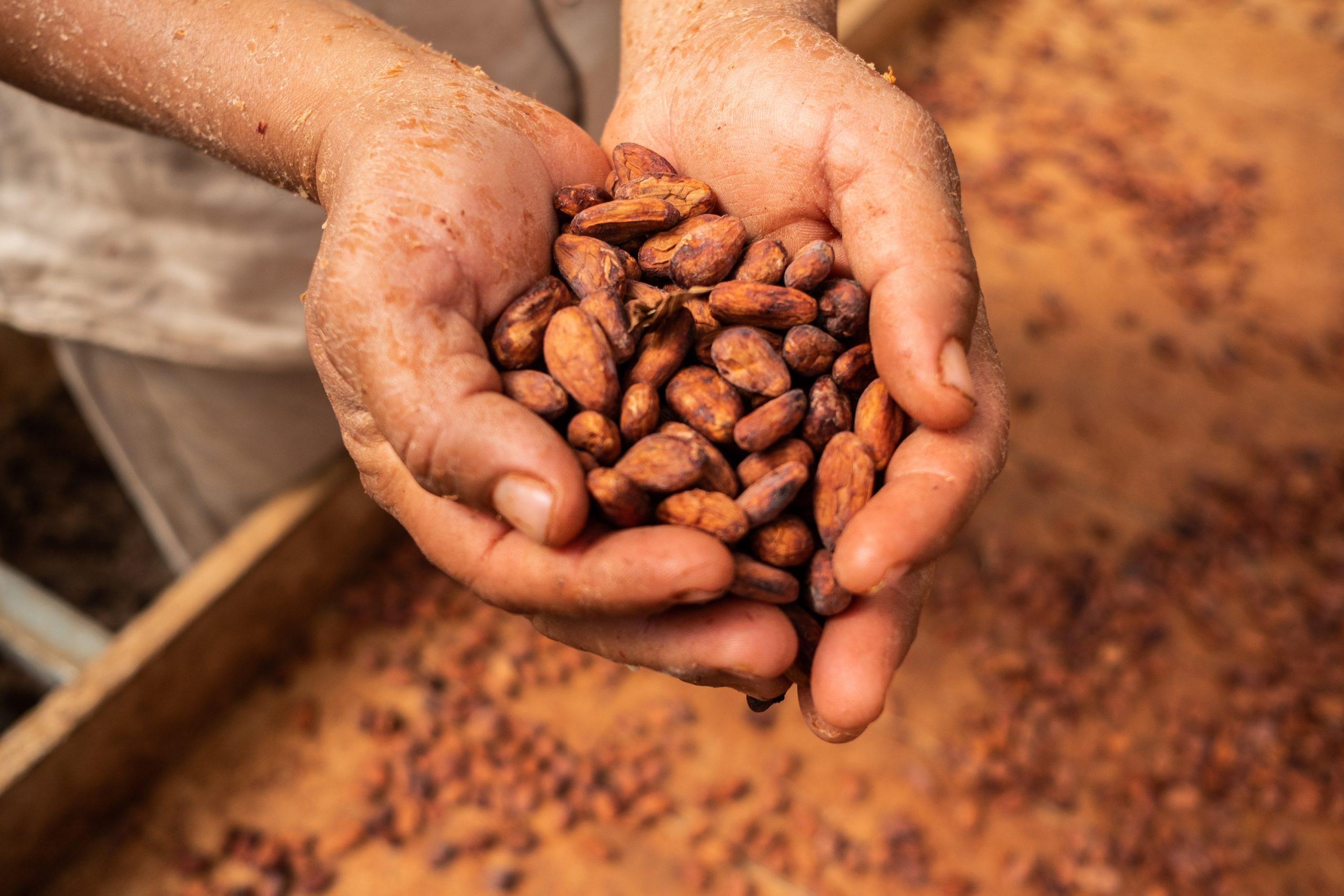 世界のチョコ原料の1%を100人で生産する工場