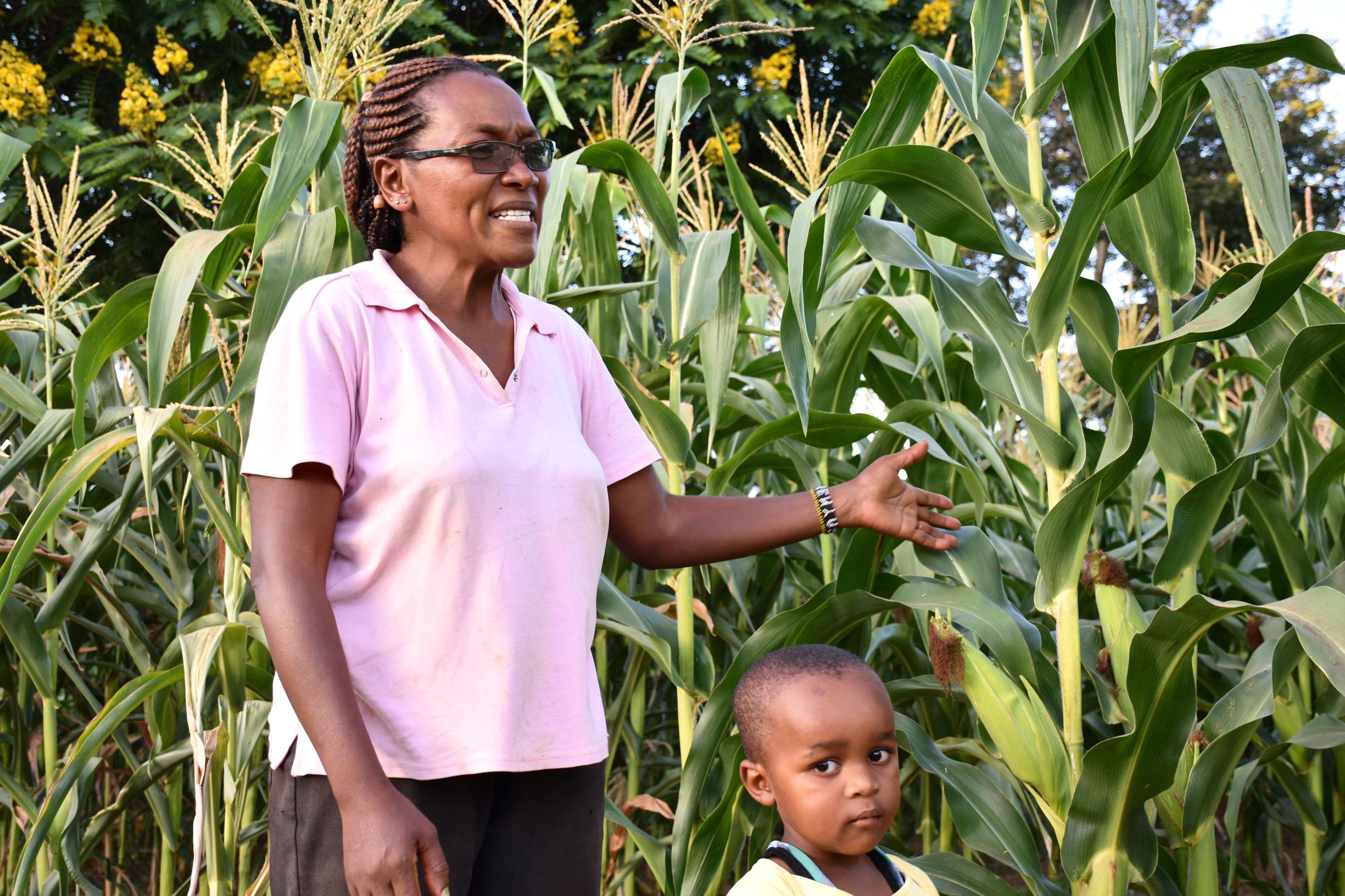 アフリカ農家を救うハイブリッド・コーンのイノベーション