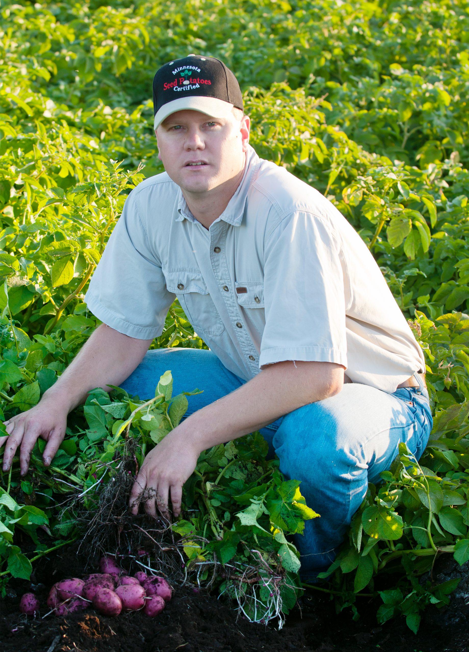 停滞するジャガイモの品種改良、有性生殖で変革に挑む育種家