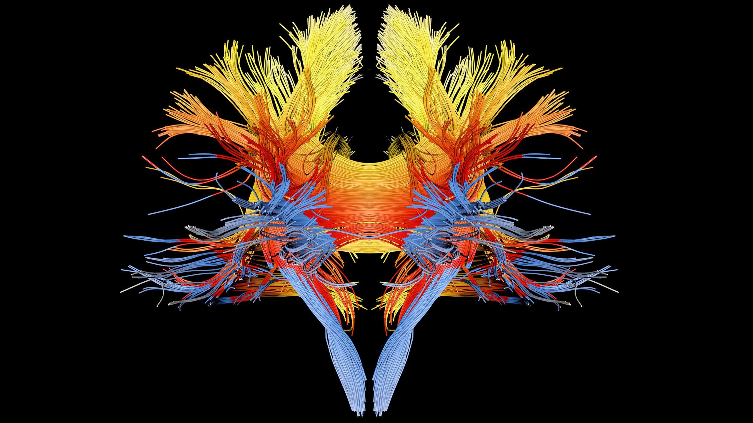 脳はいかにして「心」を生み出しているのか?